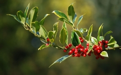 Glossàriu de sas festas de Nadale